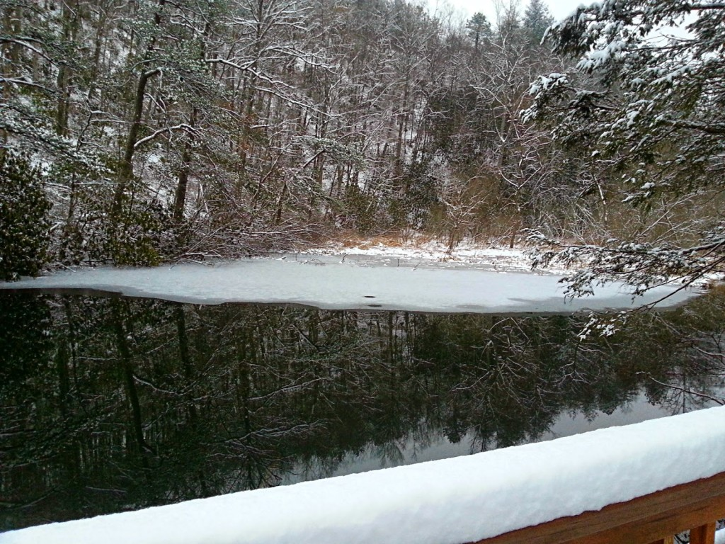 Partially frozen forest lake