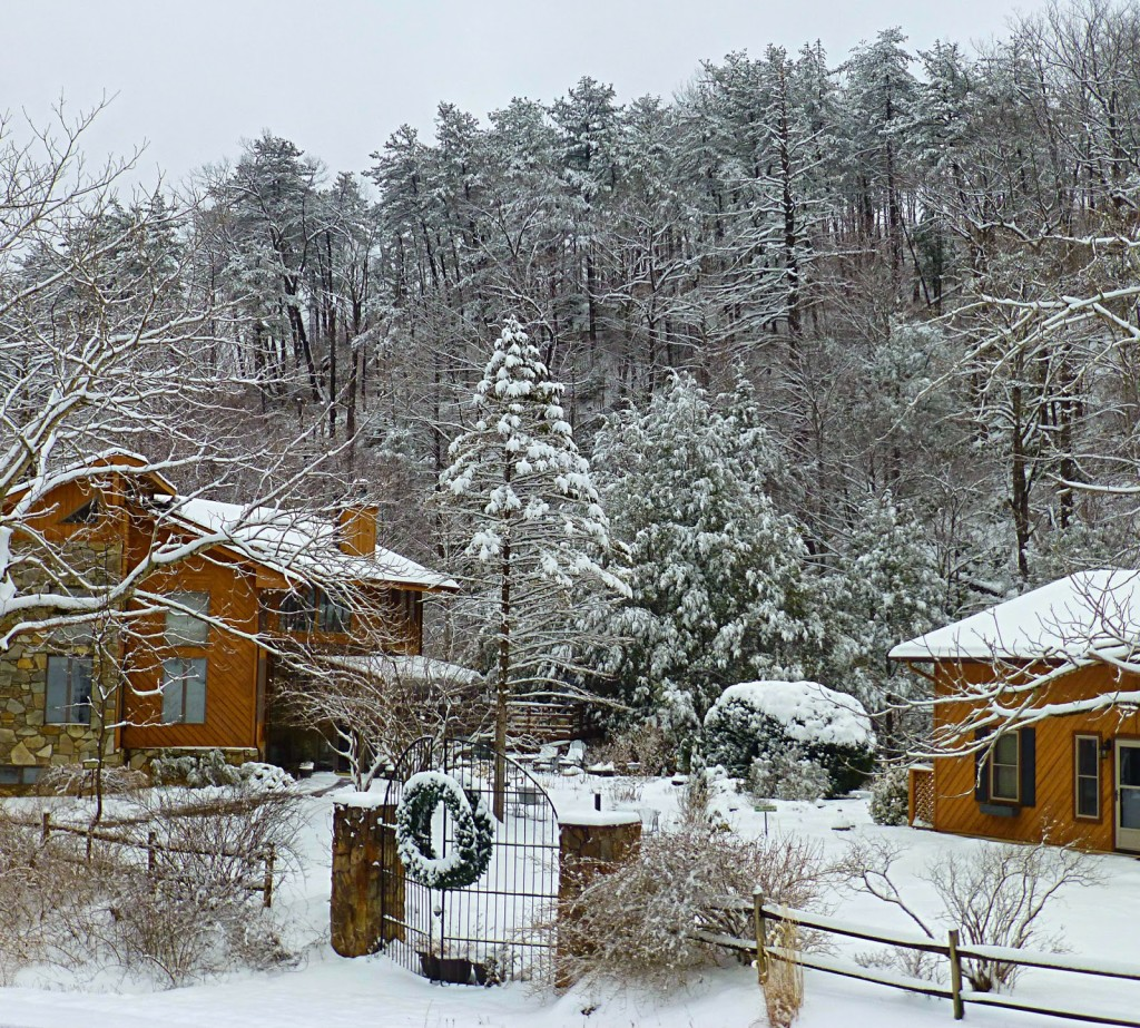 Buildings contrasted with a snowy forest landscape