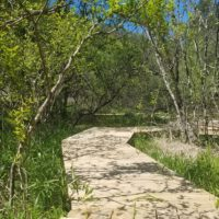 Boardwalk twisting through shrubs and grasses