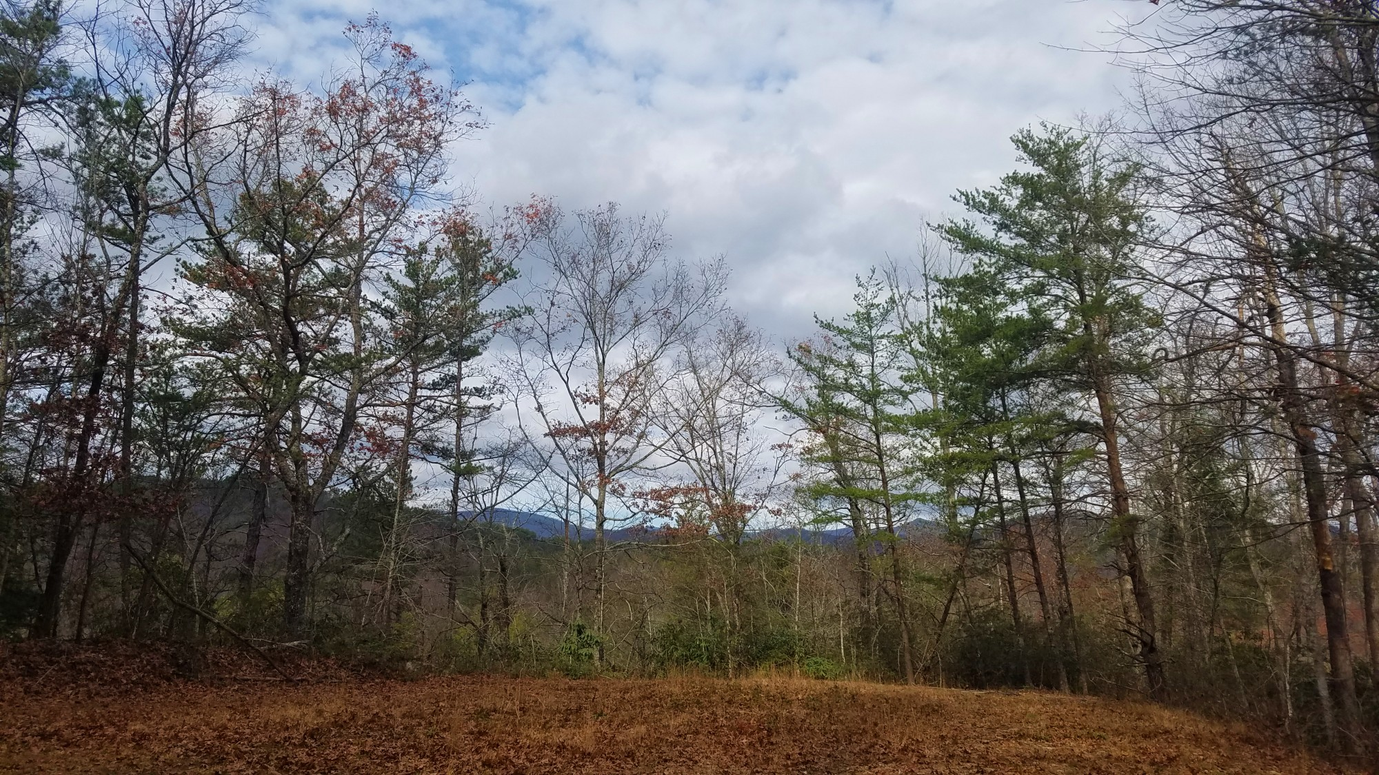 Outdoor scene with a row of tall trees and mountains behind them