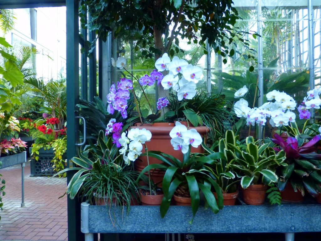 Various flower and plants in pots in front of a glass window to a room with more plants
