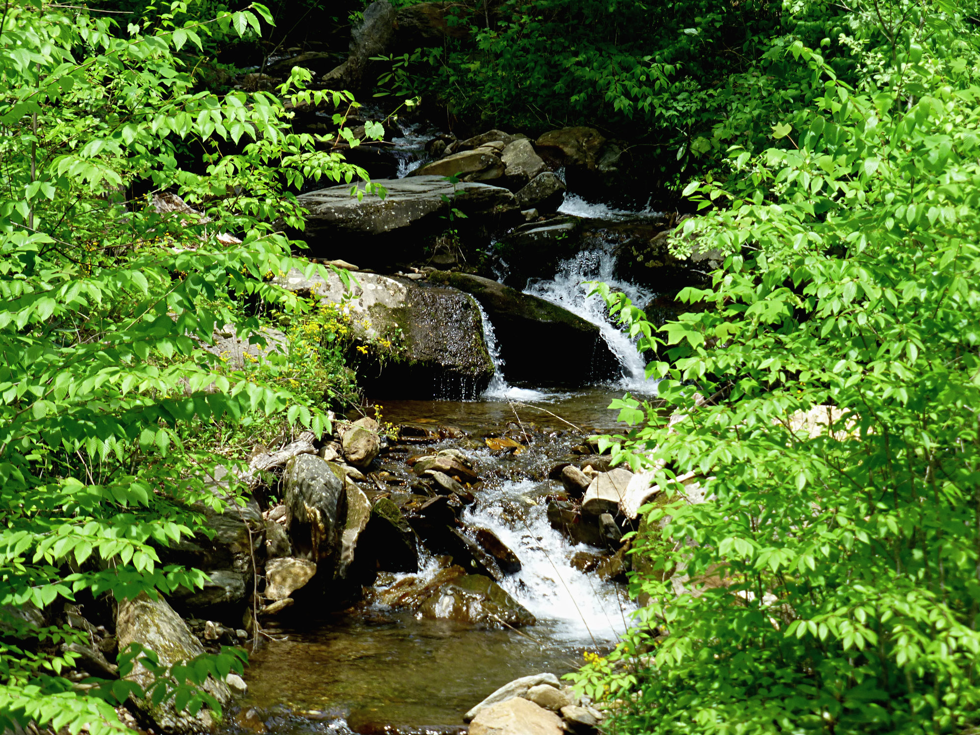 Water cascading down over various-sized boulders framed by leafy trees