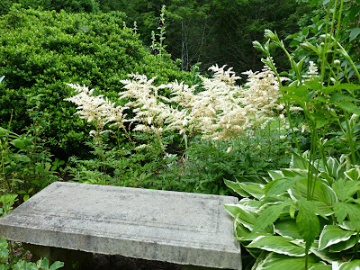 Green plants surrounding a concrete garden bench with white plumes of flowers behind it