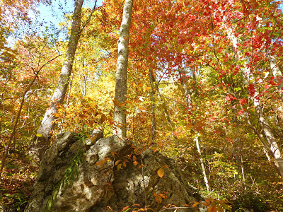 Forest scene with a boulder and trees that have brilliant red, orange and yellow fall colors