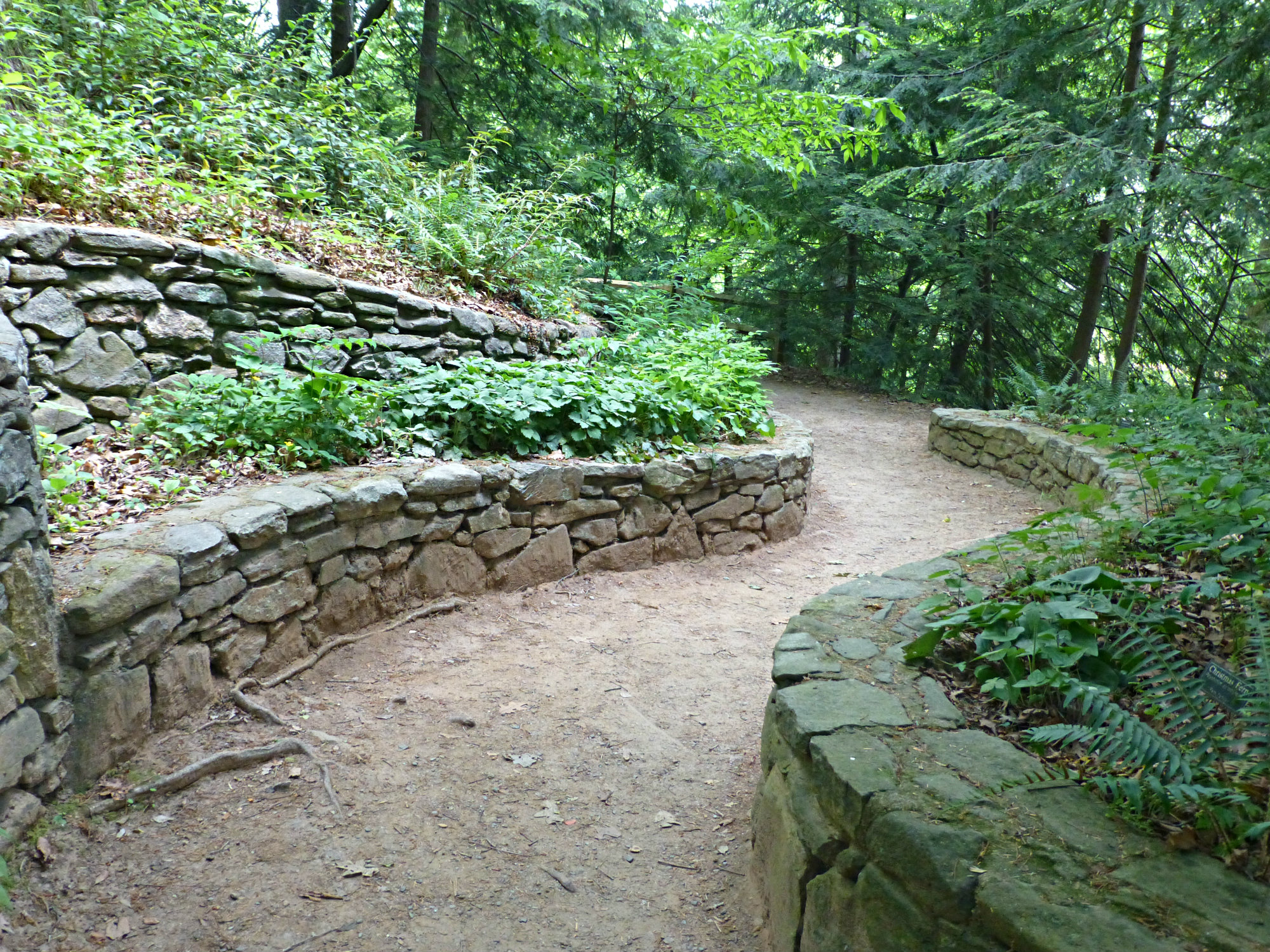 Dirt path in the woods lined with a short stone wall with more terraced stone walls on one side and leafy plants on the walls