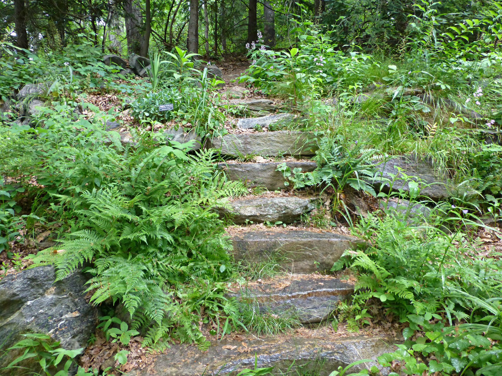 Path of stone steps leading through a forested area with leafy foliage and scattered wildflowers all around