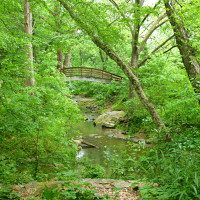 Arched wooden bridge over a stream surrounded by green leafy trees and lush foliage