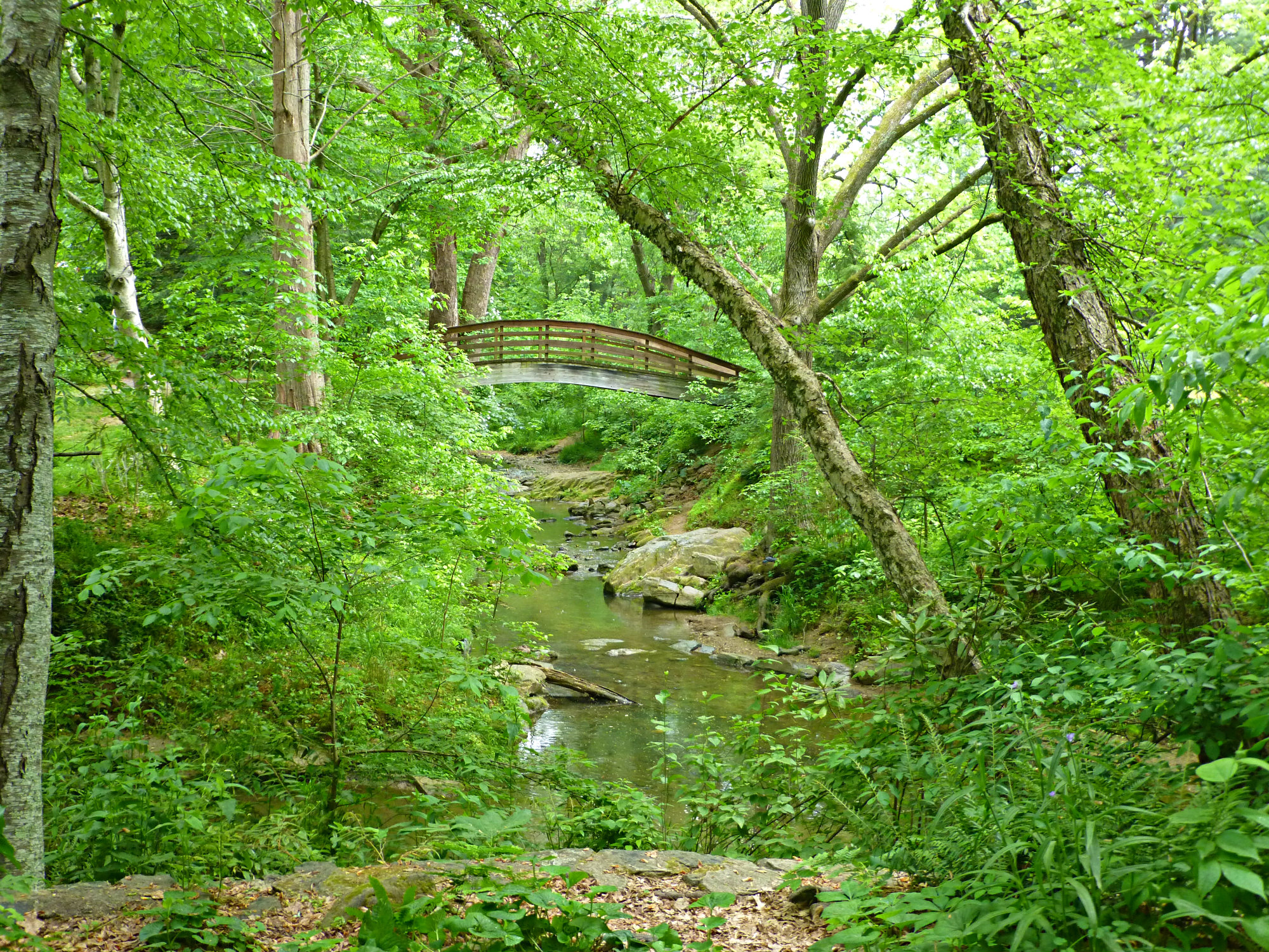 Stream surrounded by plants and trees with arched bridge in the background