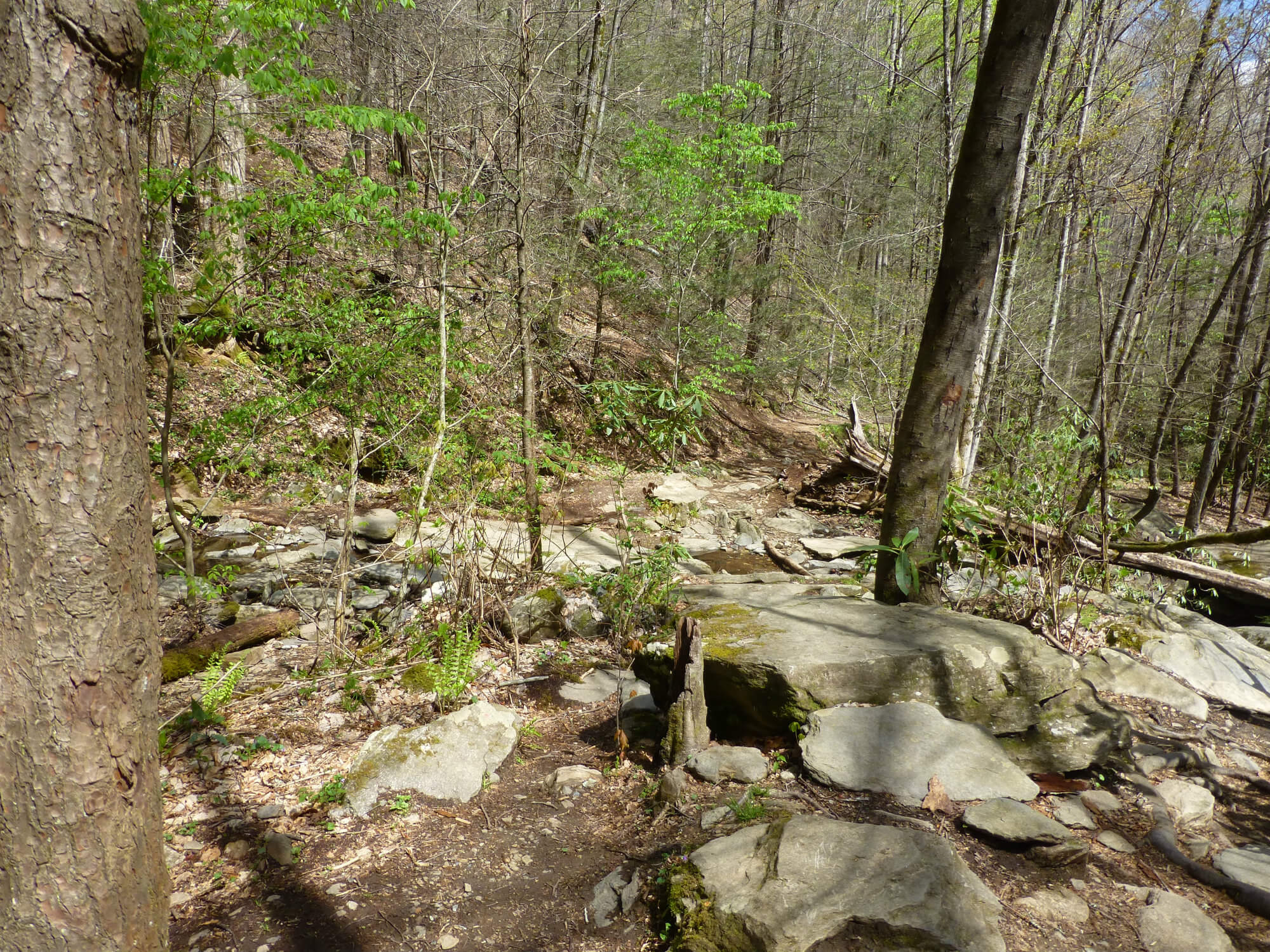 A forest hiking trail surrounded by boulders and trees
