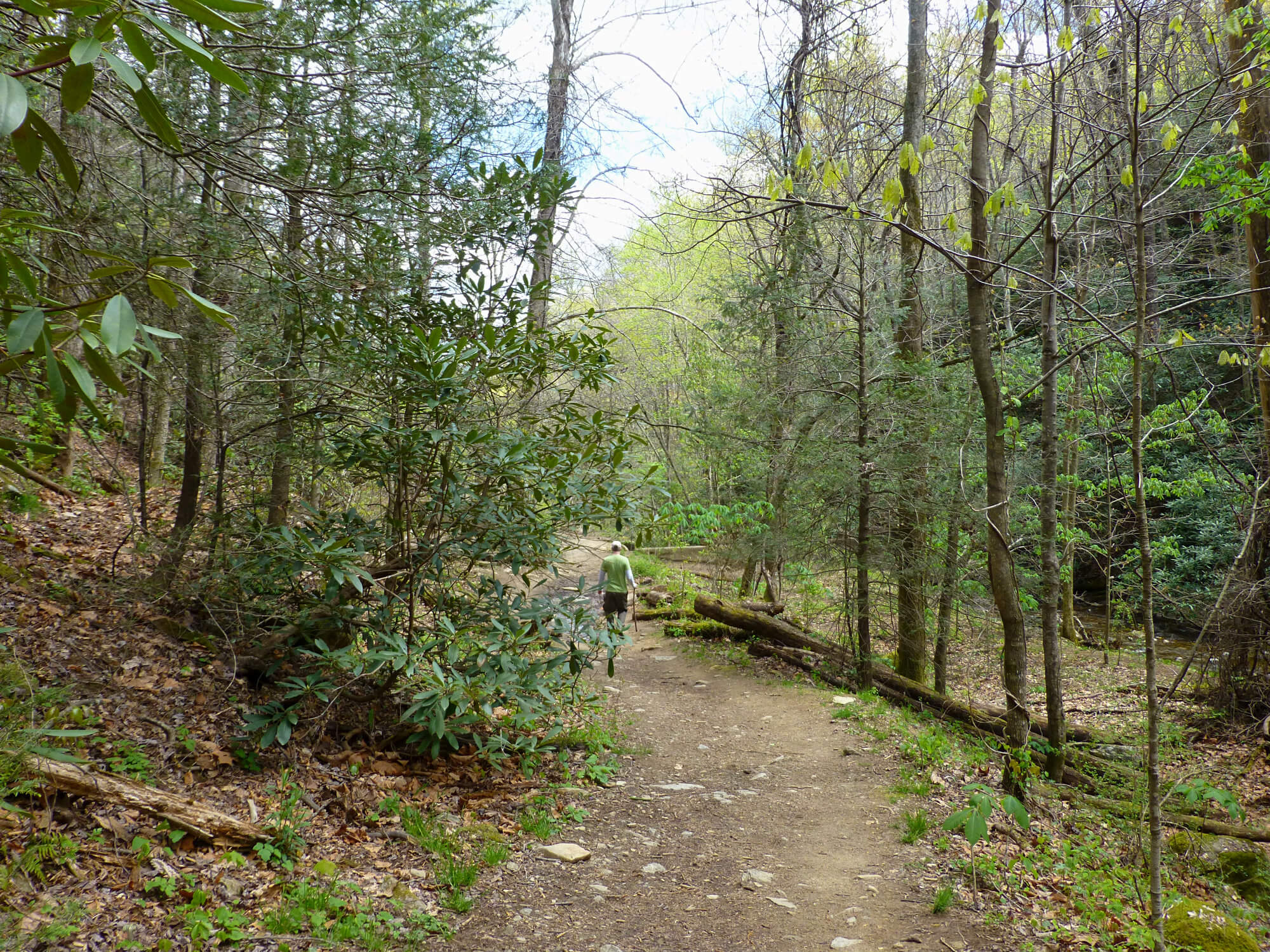 Man hiking down a forest trail that has trees that are just starting to leaf out