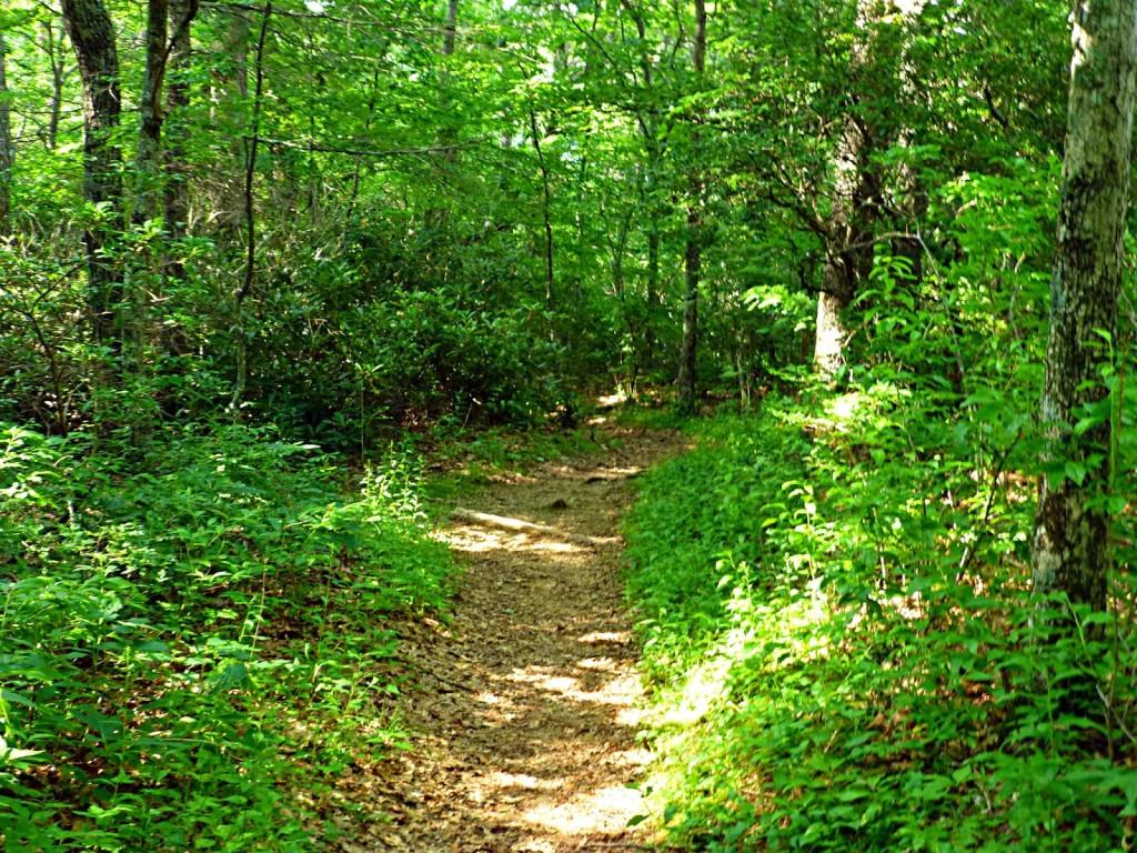 Chestoa View Trail