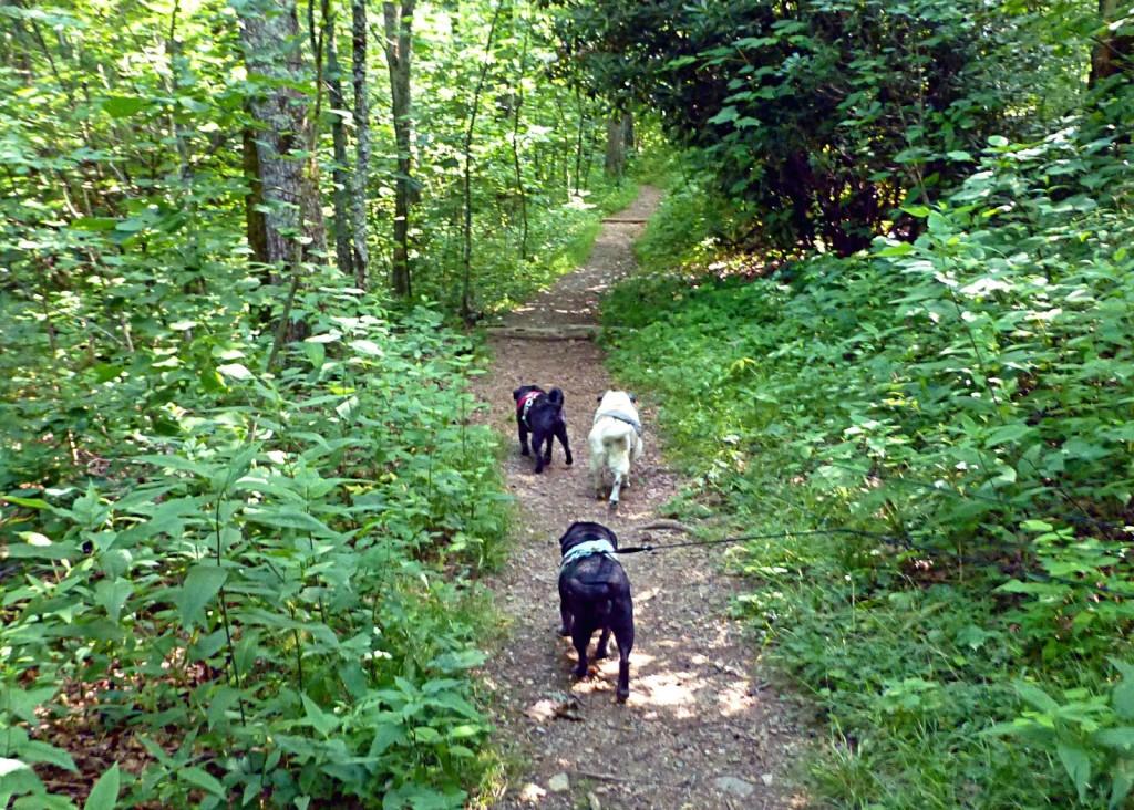 Pet Friendly Chestoa View Hiking Trail