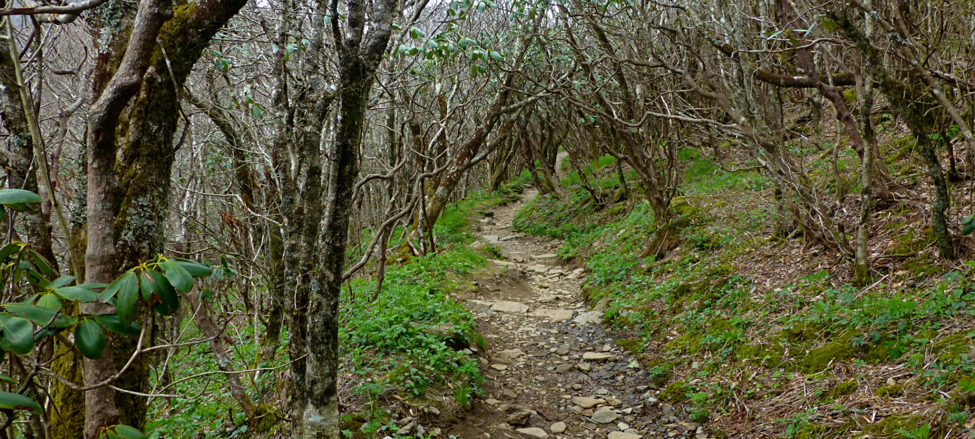 Spring Hike: Craggy Gardens on the Blue Ridge Parkway