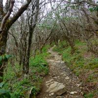 Craggy Gardens Trail 01 050916