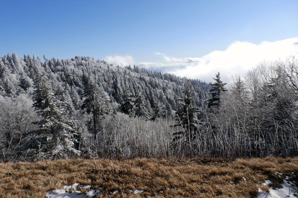 Snow covered evergreen trees on a mountain ridge