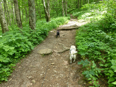 Two dogs walking down a dirt path flanked by trees and plants