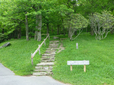 Set of stone steps with railing leading toward a forest hiking trail
