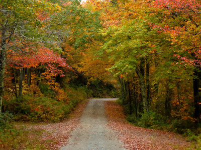 Narrow dirt road through the woods with a mix of green leaves and fall color