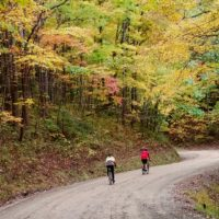 two bicyclists riding on a tree-lined dirt road