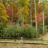 Fall Color at the Inn on Mill Creek Oct 28 2016