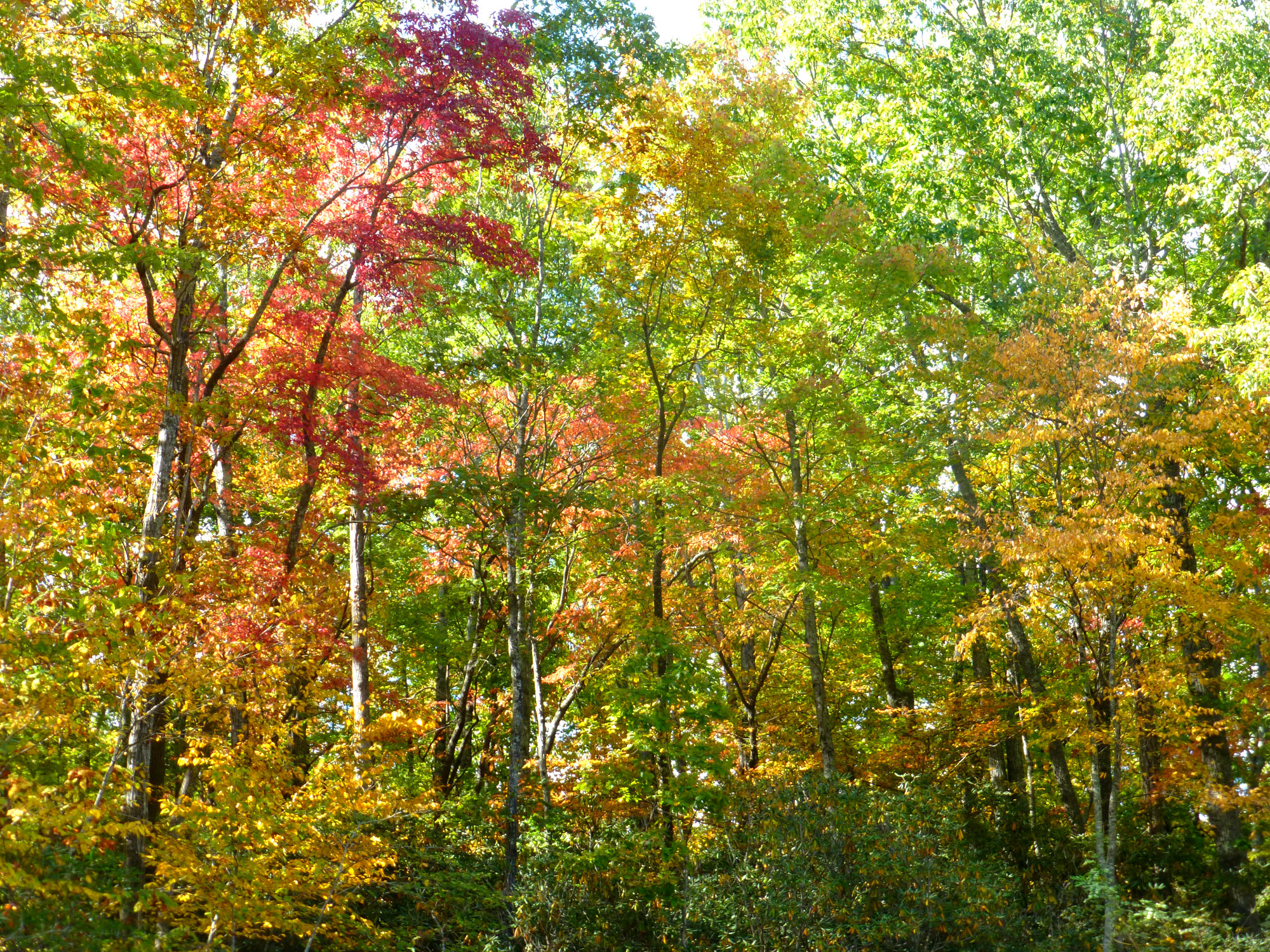 2016 Fall Color Report for the NC Mountains: Week 5
