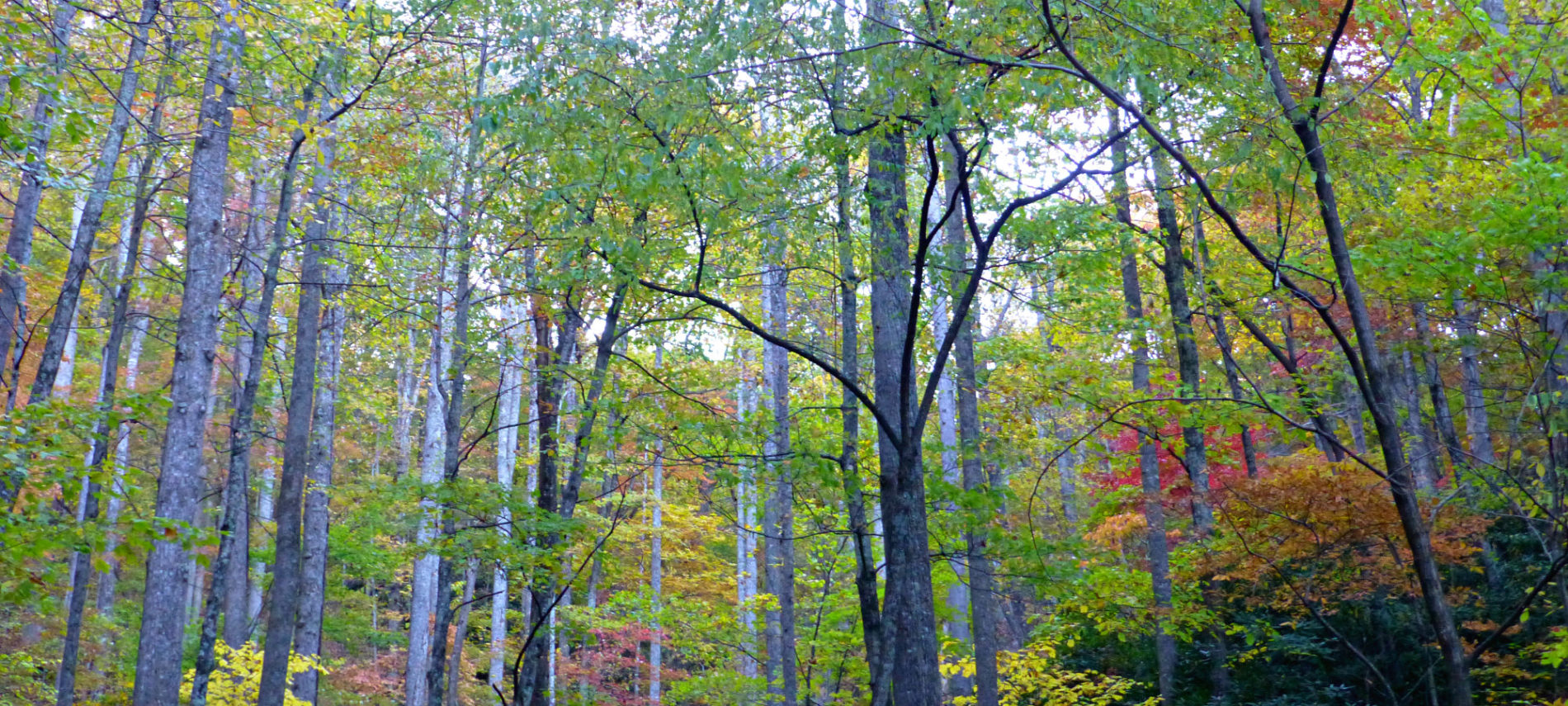 2016 Fall Color Report for the NC Mountains: Week 3