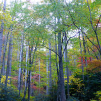 fall-colors-pisgah-national-forest-mid-october-2015
