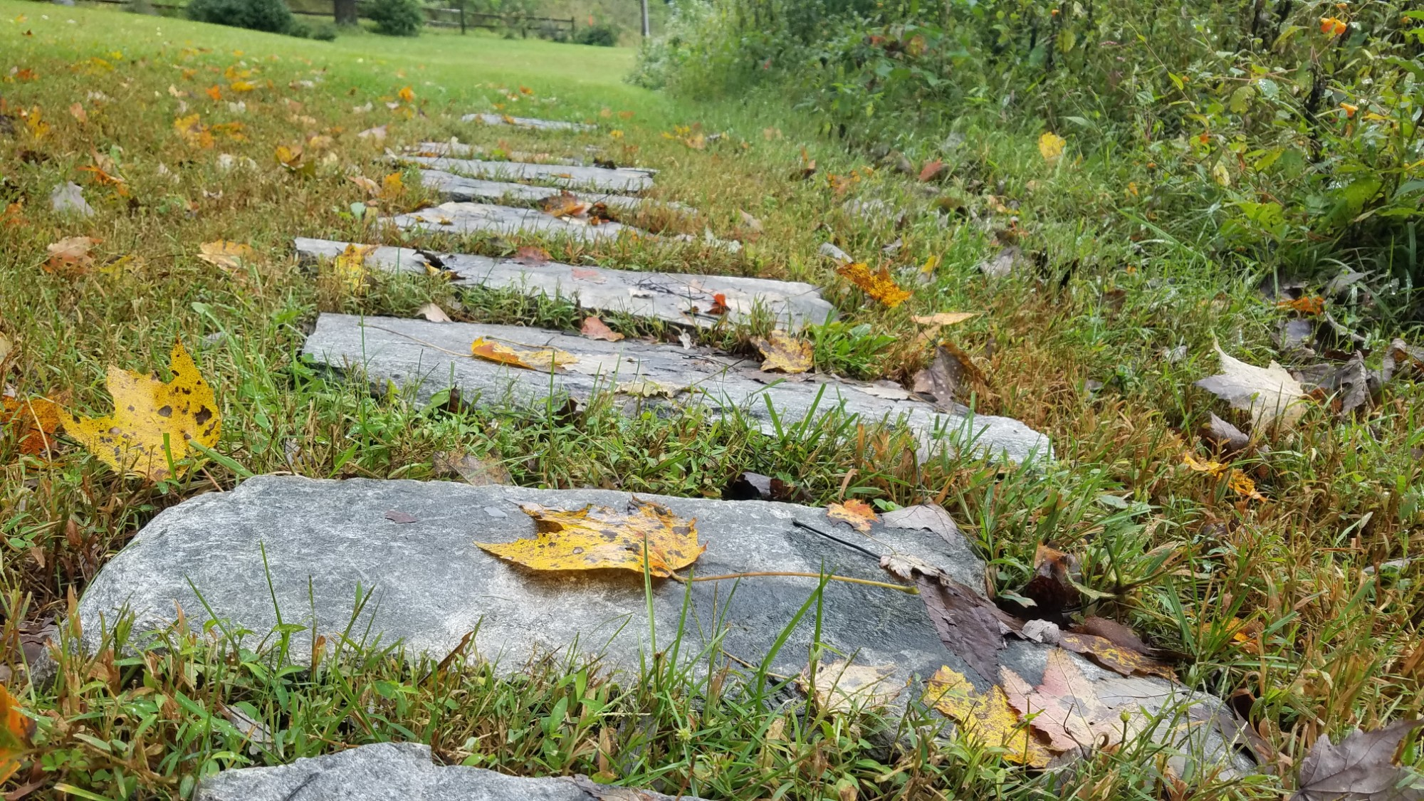 Flagstone path leading into the distant background with fall leaves covering some of the stones
