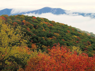 Mist floating through mountain ranges that are starting to turn fall colors