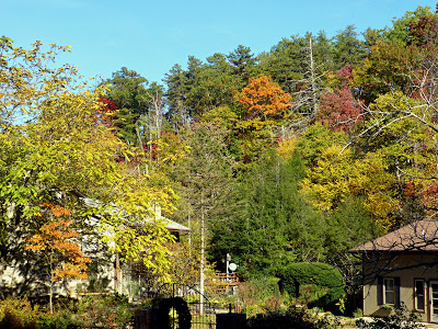 Trees on part of a ridge changing color with buildings tucked behind them
