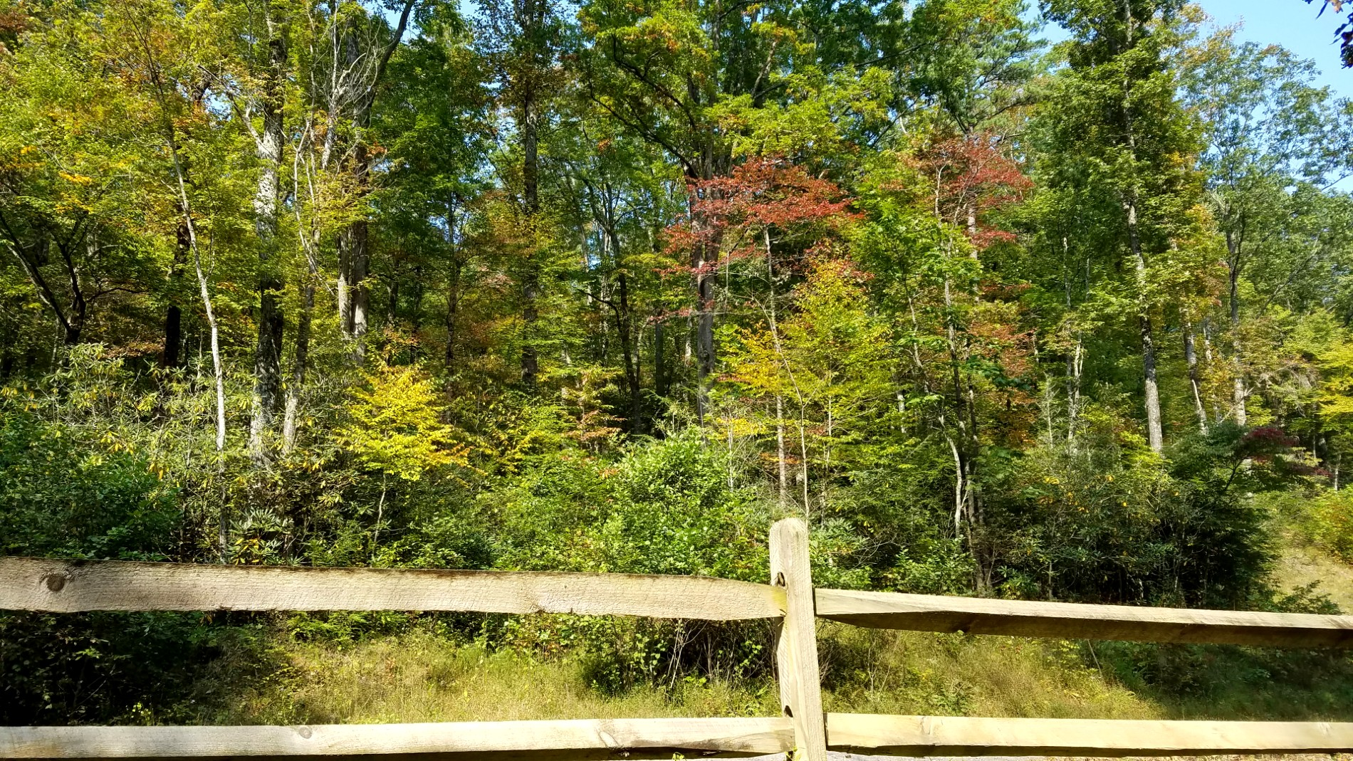 Split rail fence with tall trees behind it, some of which are showing fall foliage color