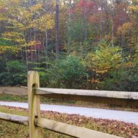 Split Rail Fence along a forest road
