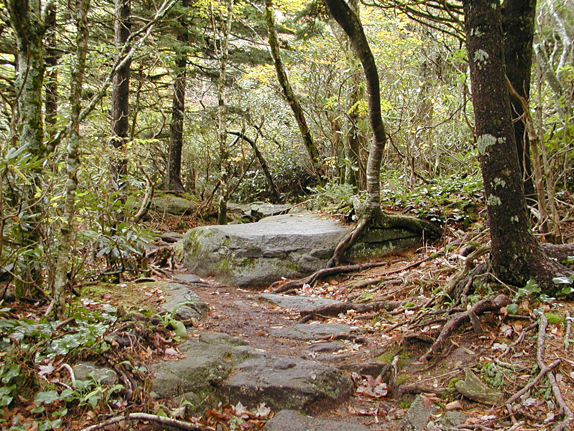 grandfather-mountain-oct-2009-black-rock-trail