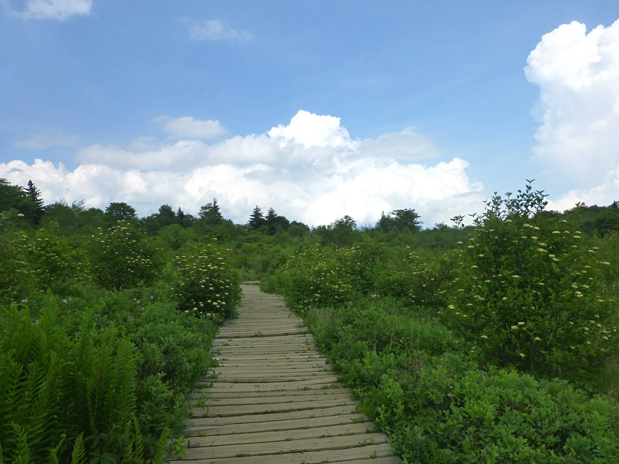 Graveyard Fields Boardwalk 1 June 2016