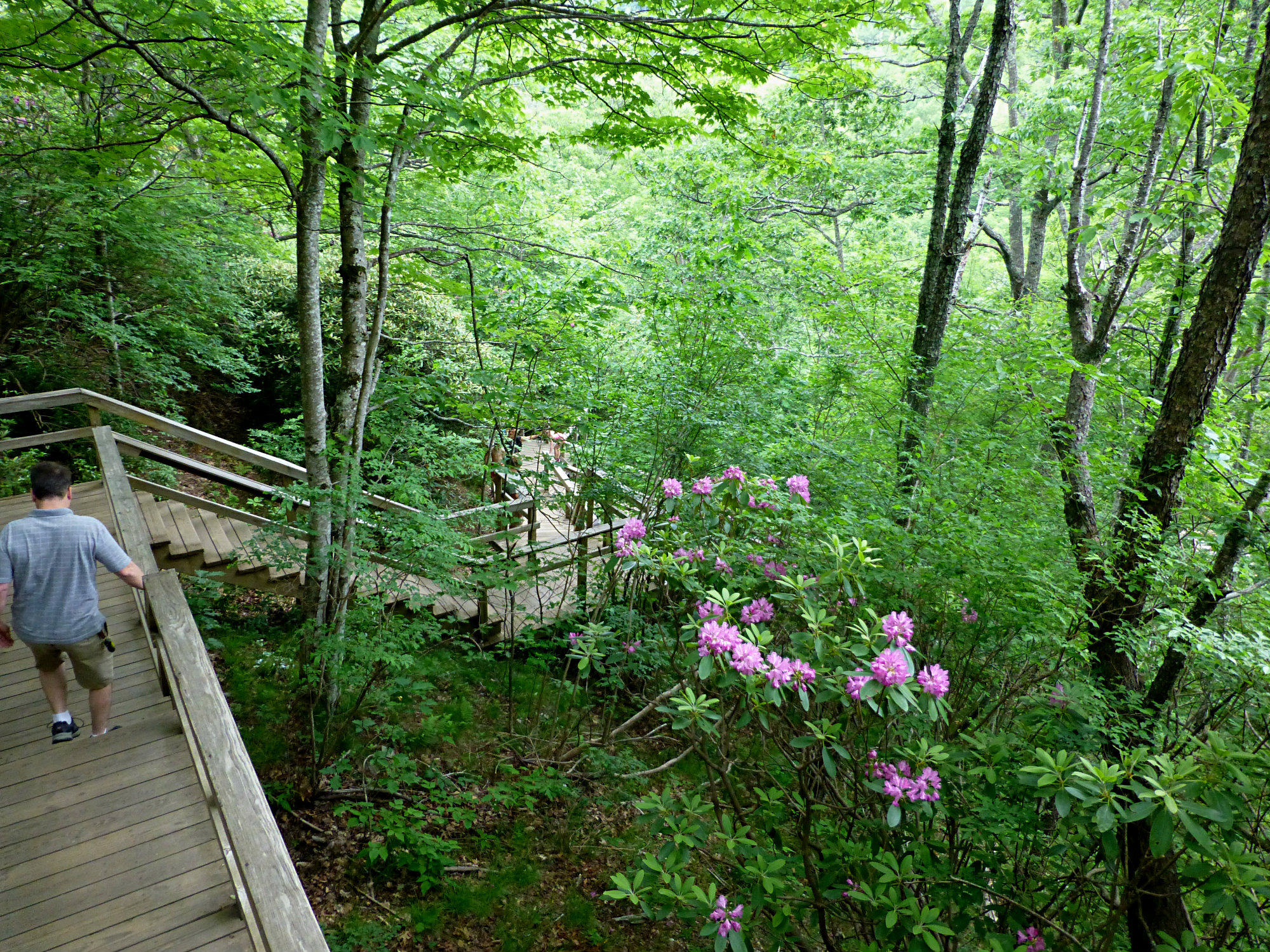 Graveyard Fields Stairs to Lower Falls June 2016
