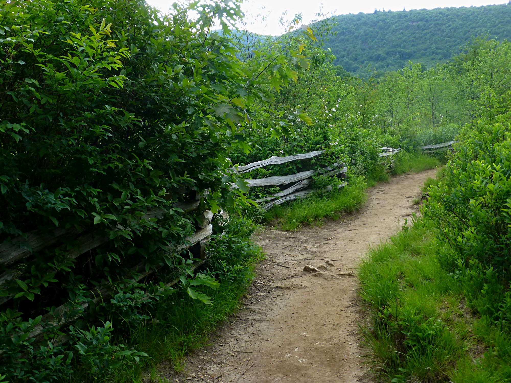 Graveyard Fields Trail Fence June 2016