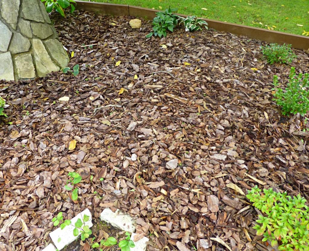 Guest Favorites Garden August 2014 Update