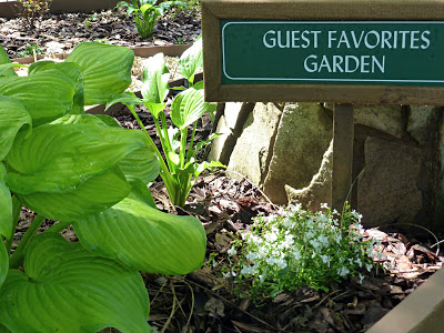 Leafy plants and white flowers with a sign that says Guest Favorites Garden