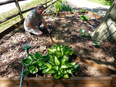 Man constructing new garden laying stream track with leafy plants in the foreground