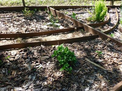 Framework in a garden