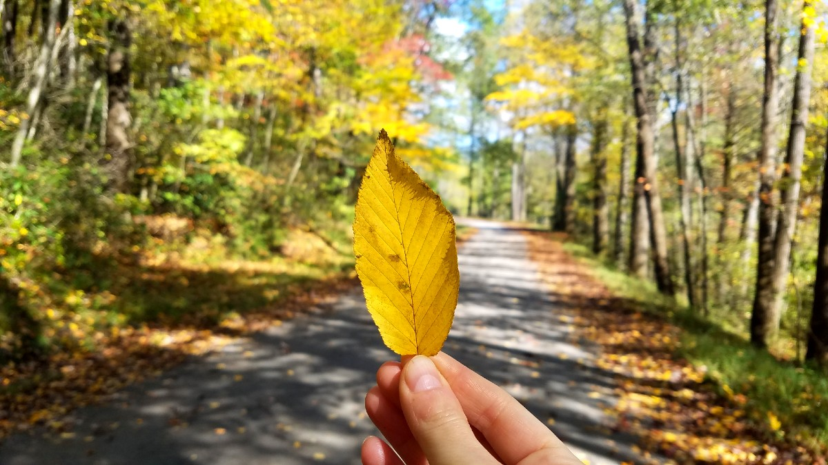 A hand holding a single leaf up to the camera with a forest road in the background