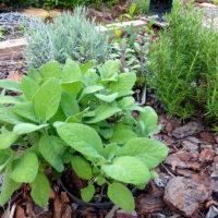 Herb Garden 2016 02