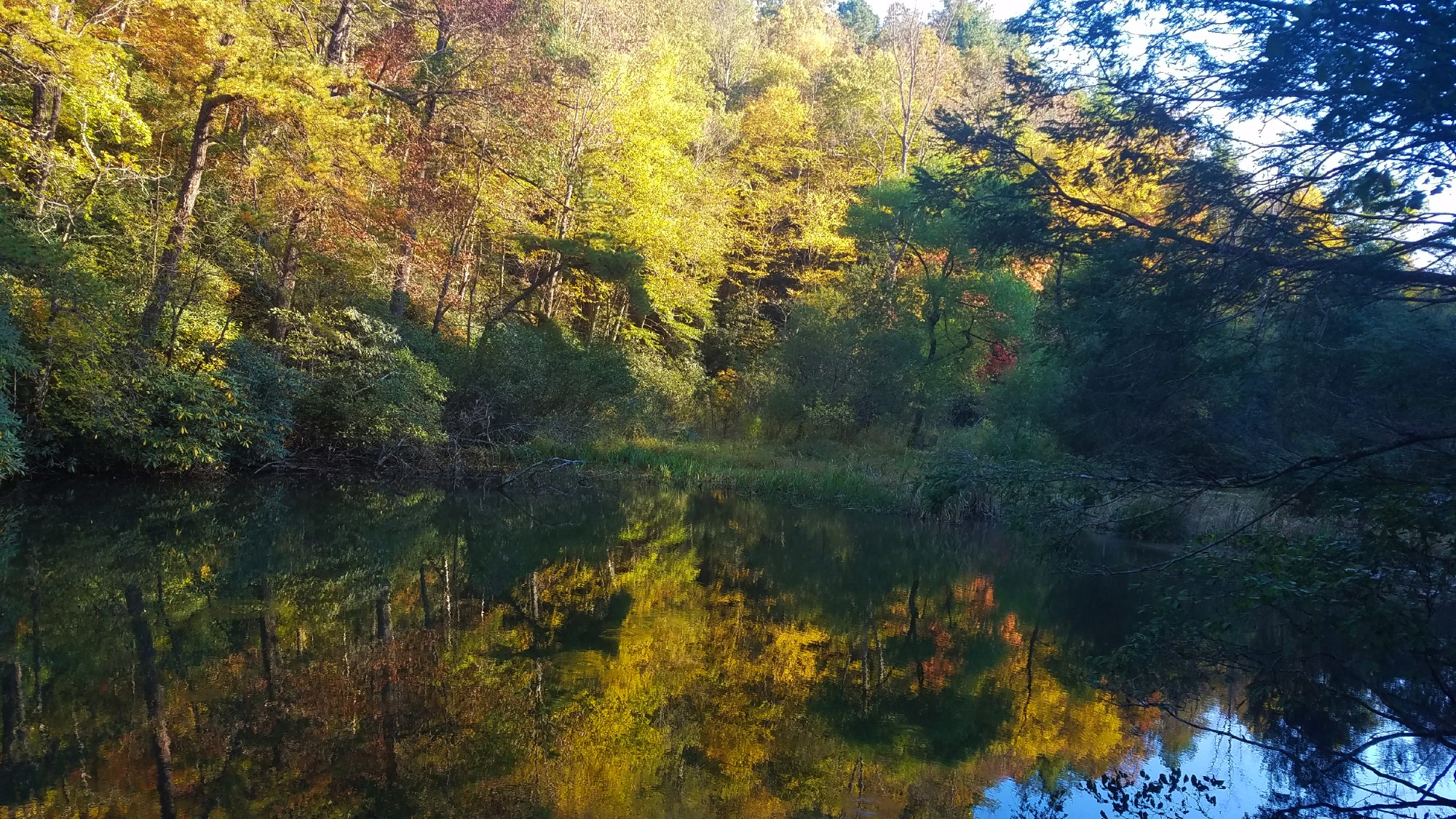 Trees reflecting fall colors in a pond in the woods