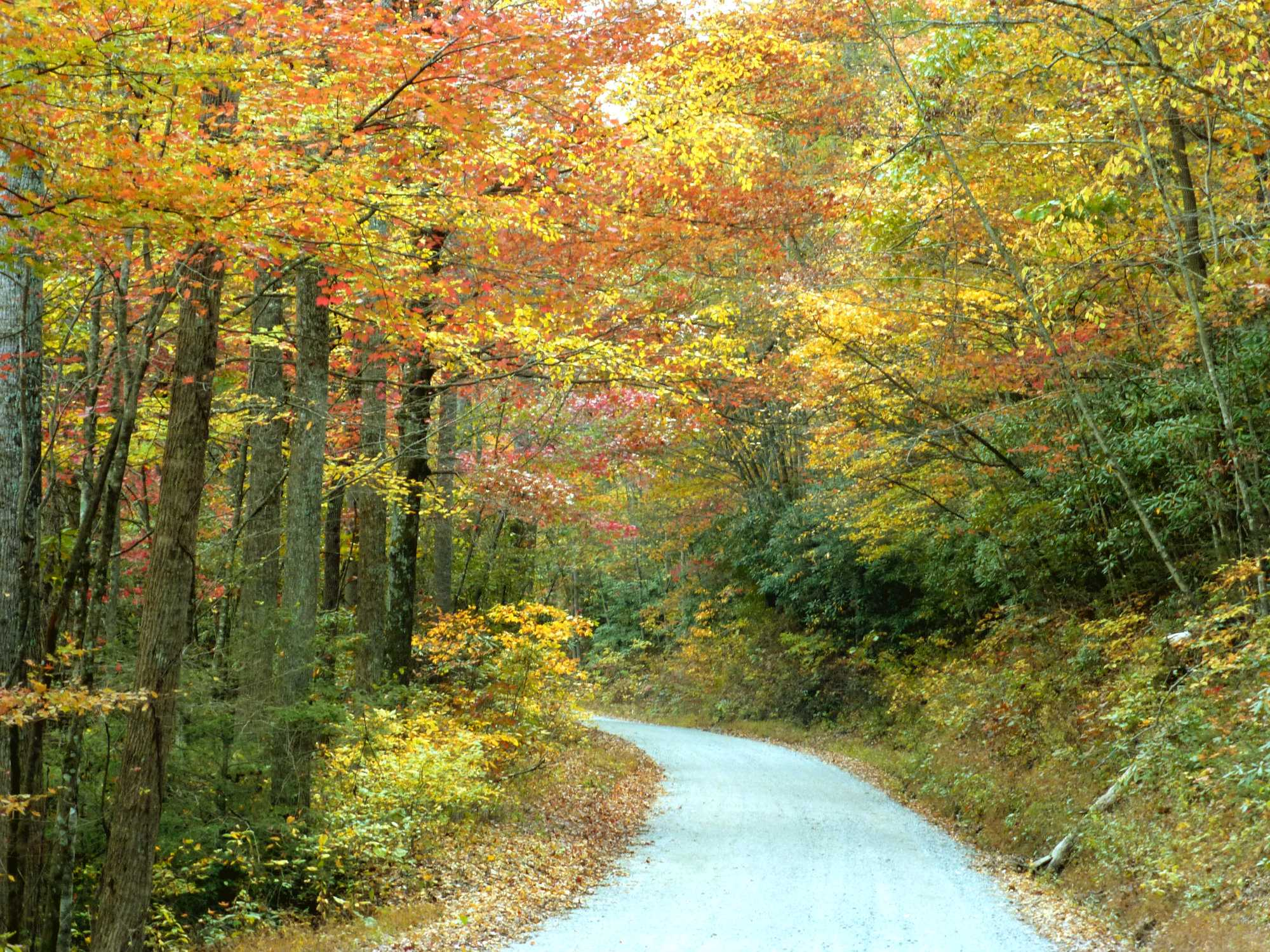 Narrow dirt road winding through a forest in full fall color