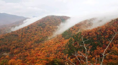 View of several mountain peaks covered in orange and red fall colors with mist between ridges