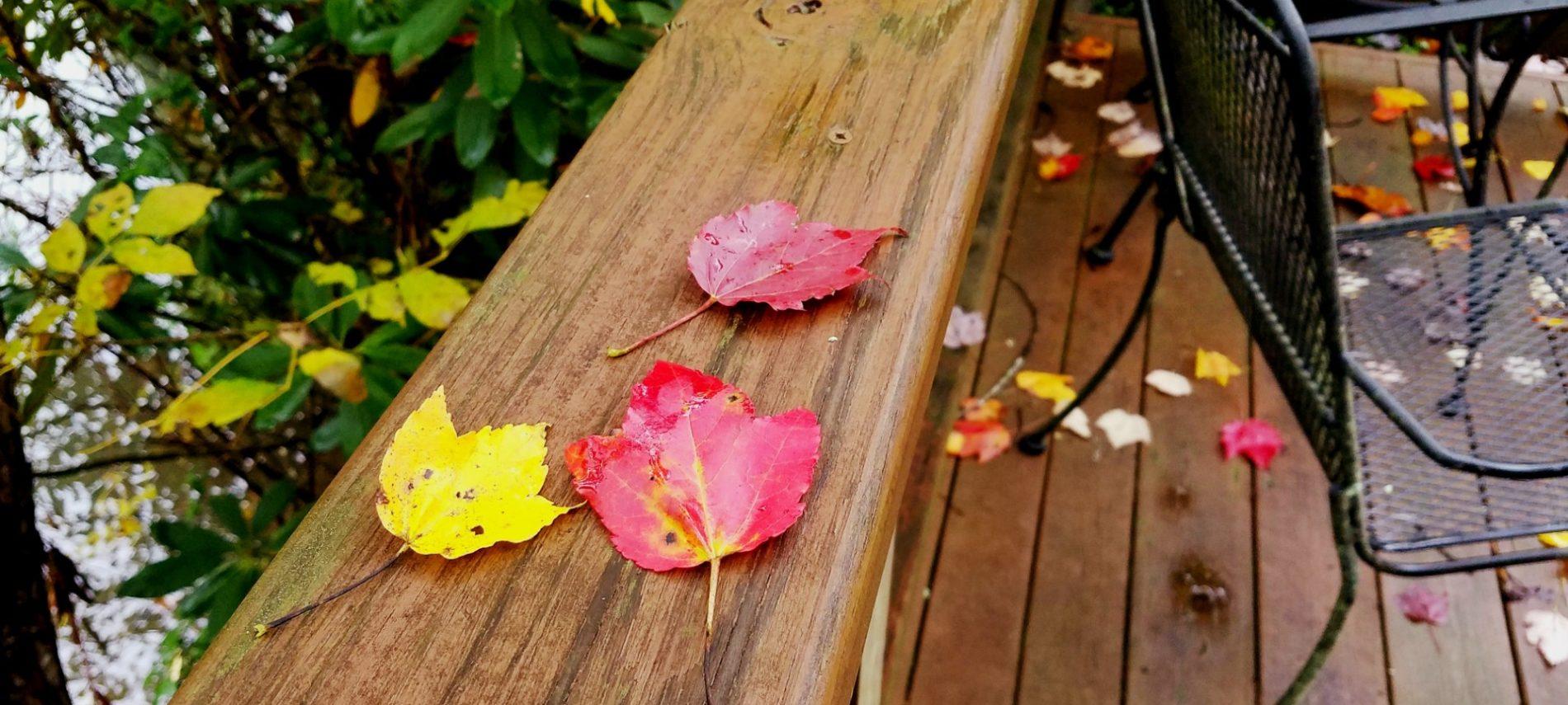 Fallen leaves on a wood deck