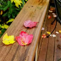 Fallen leaves on a wood deck