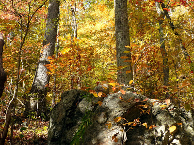 Large boulder in a forest full of trees with orange and red fall colors