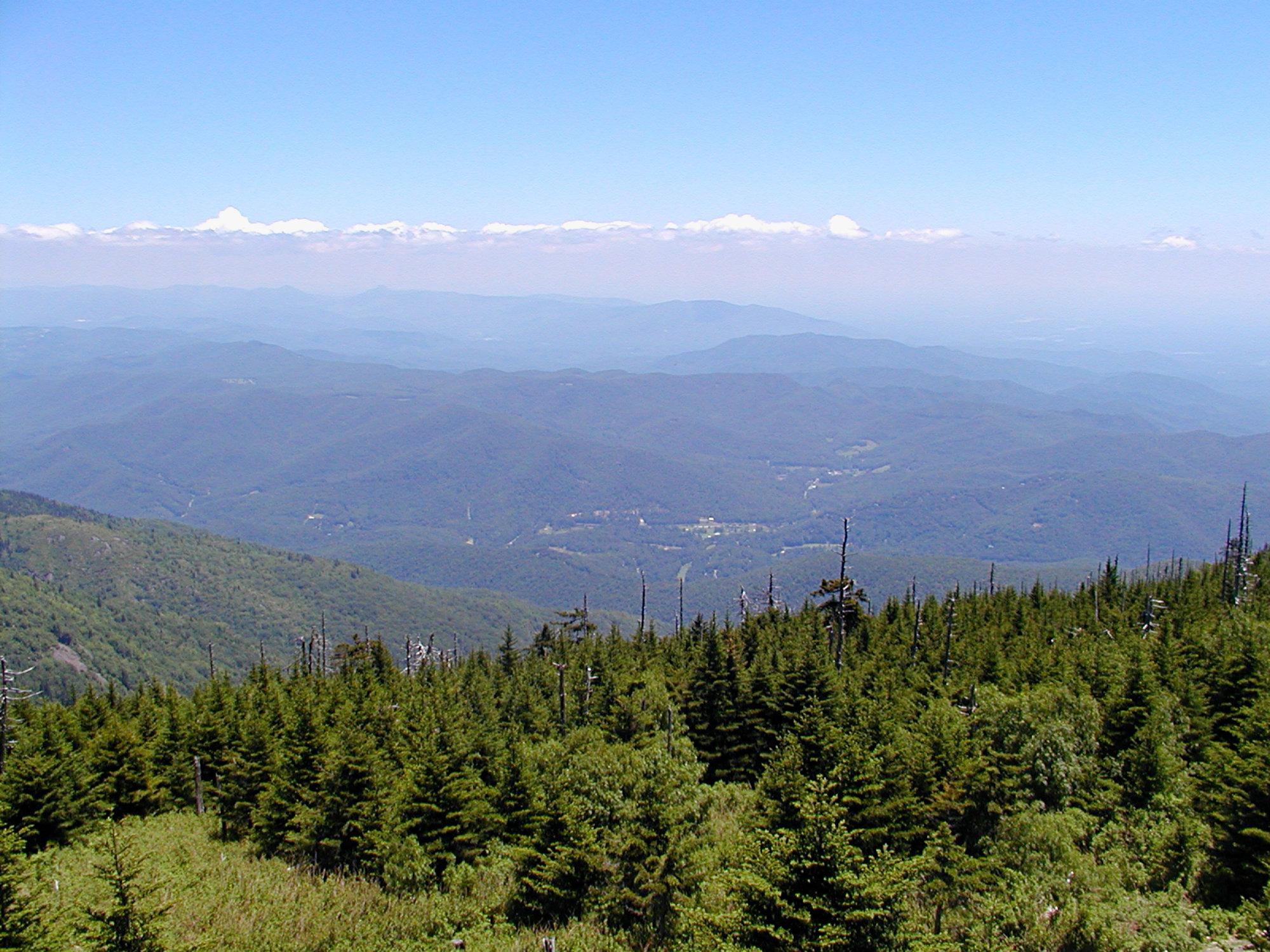 Mt Mitchell View Summer