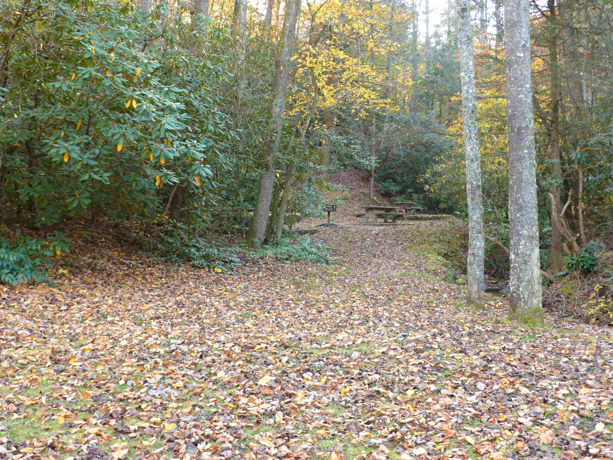Leaf covered wide path through the trees leading to picnic tables